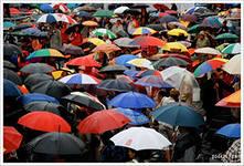Ухаживаем за зонтиком