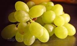 Осень – время виноградной диеты