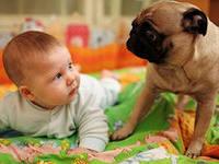 Животные в доме и дети